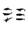 whales for laser cutting vector image vector image