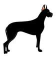 big black dog on white background vector image