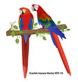 couple of scarlet macaw on a branch isolated vector image vector image