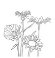 drawing cornflowers and chamomiles vector image vector image