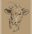head beauty cow drawing brown vector image