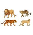 set big cats vector image