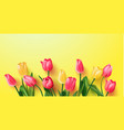 tulips on a yellow backgroundspring background vector image vector image