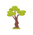 green tree element of tropical jungle forest vector image vector image