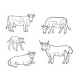 set different cows in outlines vector image