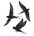 swallow vector image vector image