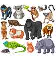 Different type of wildlife animals on white vector image vector image