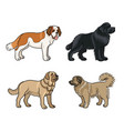 dogs different breeds in color set2 vector image vector image
