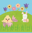 cute rabbit and chick in the field easter vector image