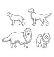dogs different breeds in outlines set4 vector image vector image