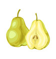 ripe pear and slice vector image