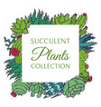 succulents decorative cacti green plants vector image vector image