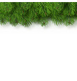 christmas tree branches background christmas and vector image vector image