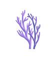 coral aquatic marine plant underwater seaweed vector image