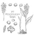 set hand drawn of turmeric roots lives and vector image