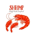 Shrimp in cartoon style vector image