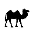 cartoon bactrian camel vector image