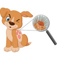 flea infested dog vector image