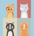 pet cats domestic feline characters set cartoon vector image