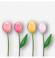 pink 3d isolated tulip spring flower set vector image vector image