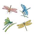 set different dragonflies vector image
