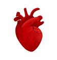 anatomical human heart cartoon design medical vector image