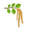 birch branch with earrings spring came vector image vector image