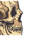 human skull art hand drawn vector image vector image