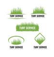 turf lawn and garden care company creative design vector image vector image