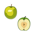 apple sliced apple half vector image