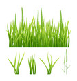 grass realistic green nature pictures vector image
