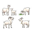 set white goats vector image vector image