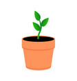 a young plant in an orange pot green leaves vector image
