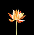 a beautiful golden lotus vector image