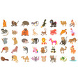animals icon set cartoon style vector image
