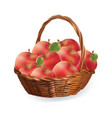 basket with apples harvest apples vector image