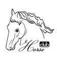 hand drawn horse head vector image vector image