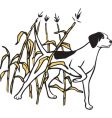 hunting dog in field vector image vector image