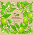 lime branches frame on color background vector image vector image