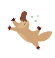 a cute australian platypus animal character design vector image