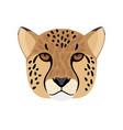 cheetah head icon vector image