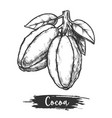 cocoa pod or cacao bean with leaf sketch vector image vector image