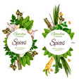 organic spices and herbal garden seasonings vector image vector image