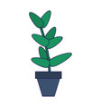 plant pot isolated vector image