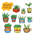 set isolated succulent plants agave aloe vera vector image