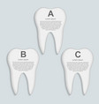 tooth infographic Design template vector image vector image