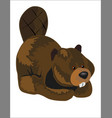 beaver stuffed toy vector image vector image