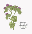 burdock plant hand drawn medical and cosmetic vector image