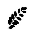 rowan or sorb tree leave silhouette plant and vector image vector image