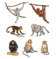 set different monkeys vector image vector image